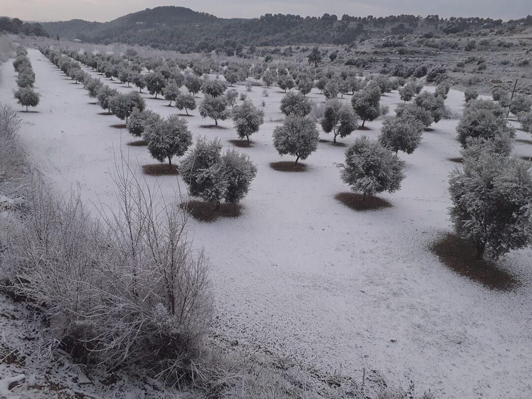 La Vall - Dani Timoneda